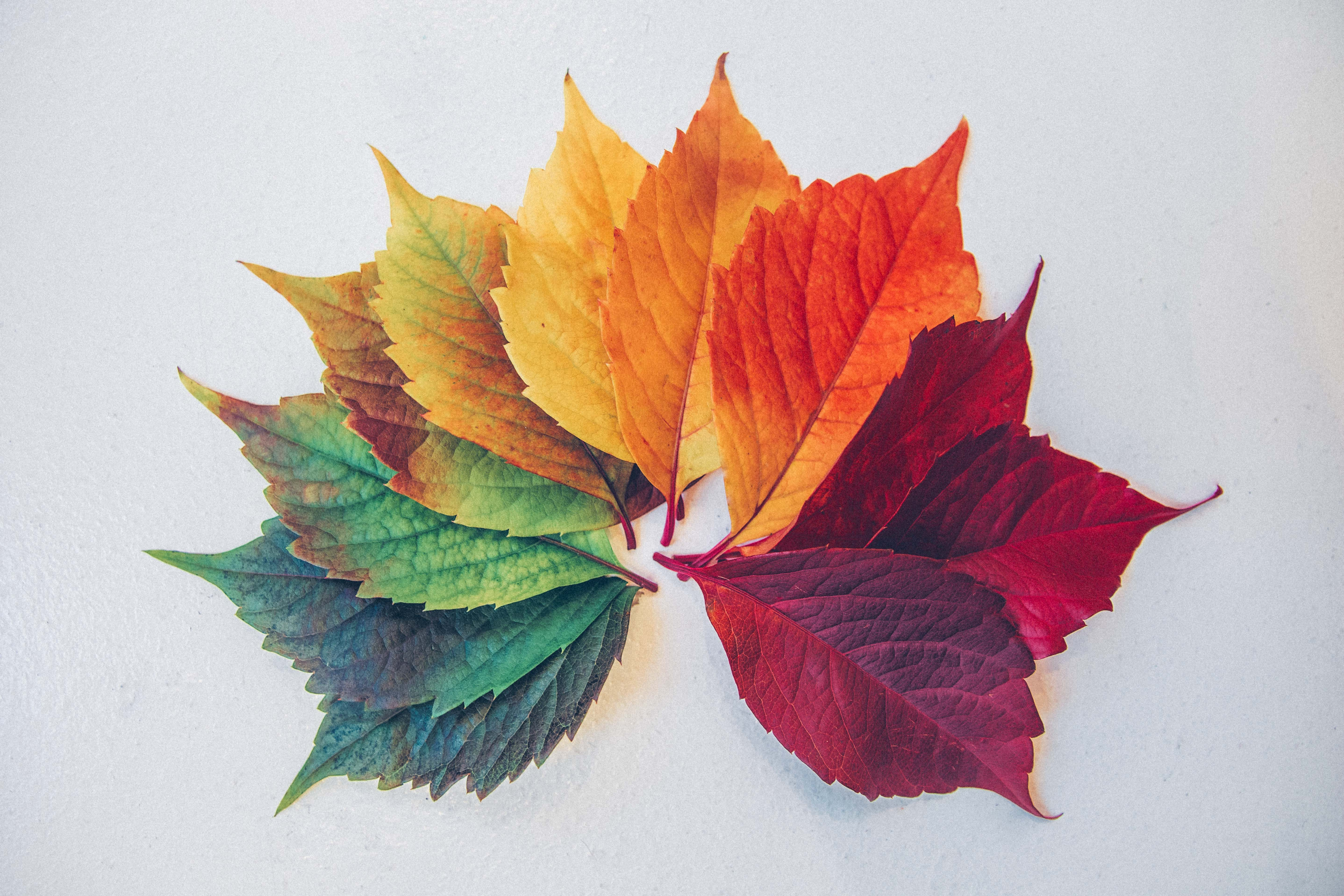 Different coloured leaves arranged in a semi circle creating a rainbow effect from green to red.
