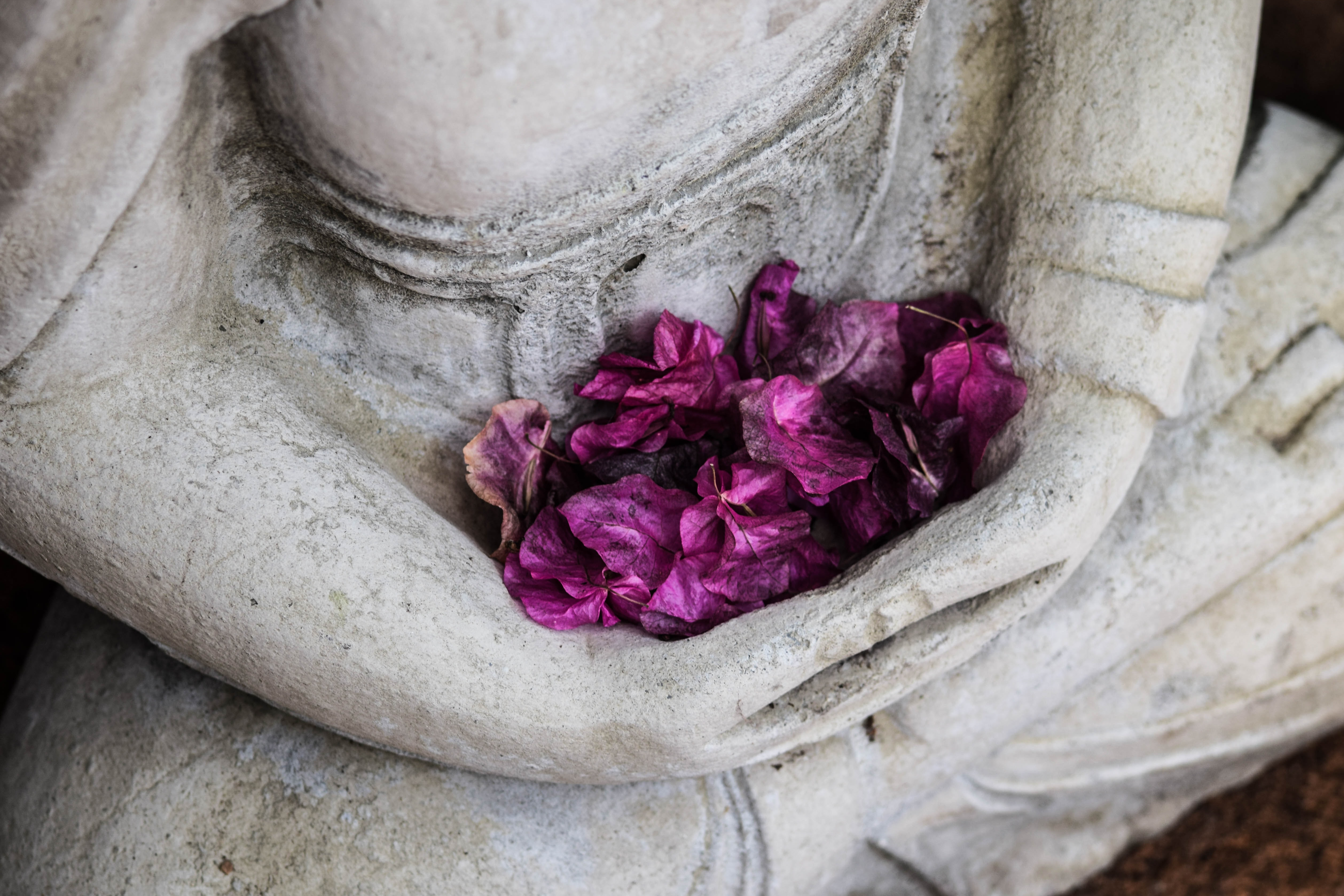 Purple leaves in the lap of a stone statue.